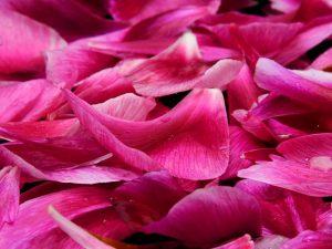 Rosenblätterabend in Gmunden