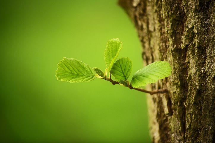 Heilung des Stammbaumes